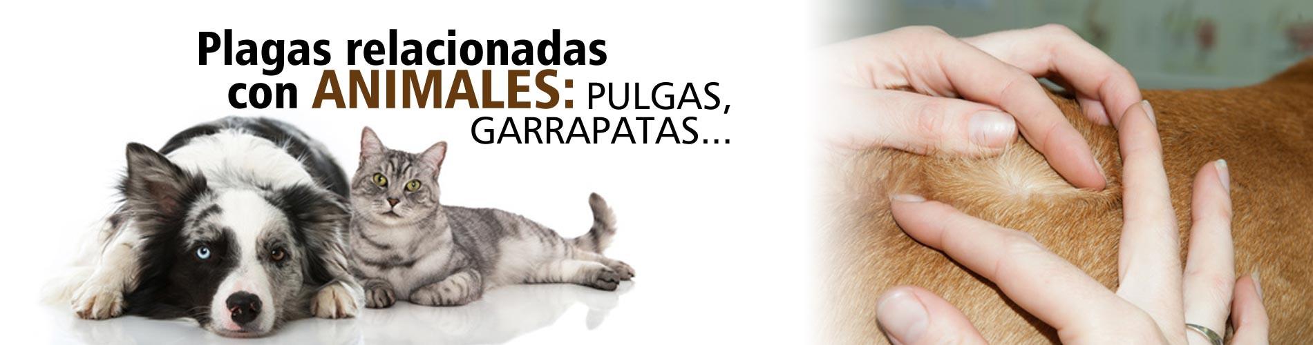 Plagas relacionadas con animales: pulgas, garrapatas